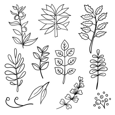 Botanical hand drawn elements
