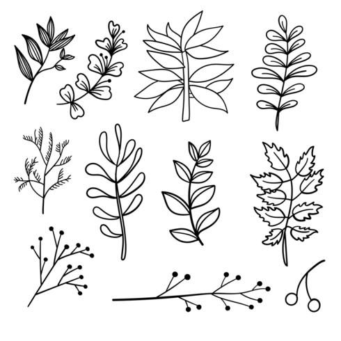 Botanical hand drawn elements