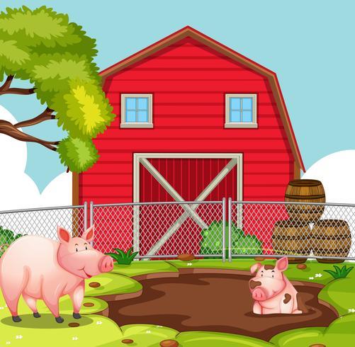 Maiale felice in terreni agricoli