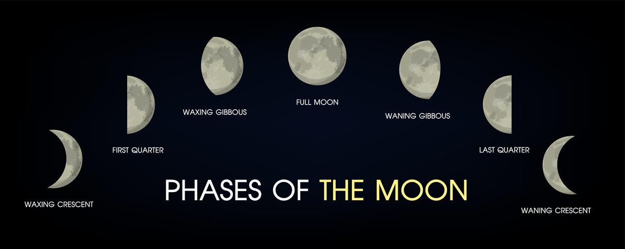 Las fases de la luna. vector