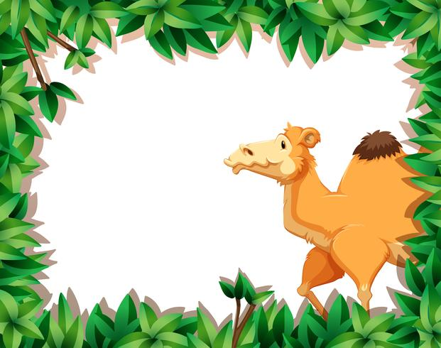 Camel on nature border