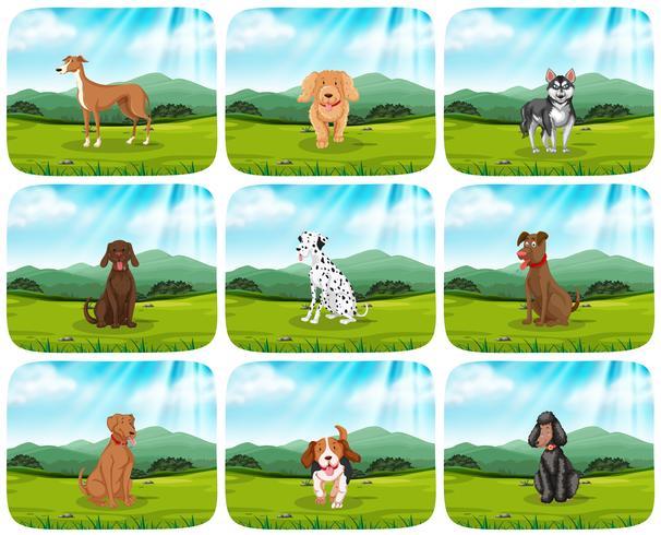 Set of dogs in park scene