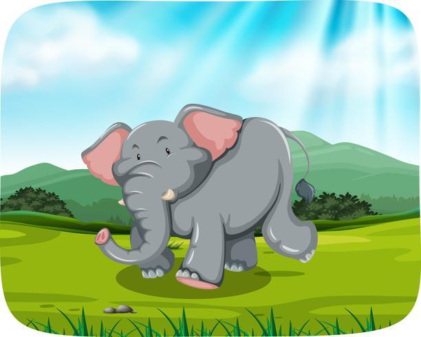 Elefant in der Naturszene