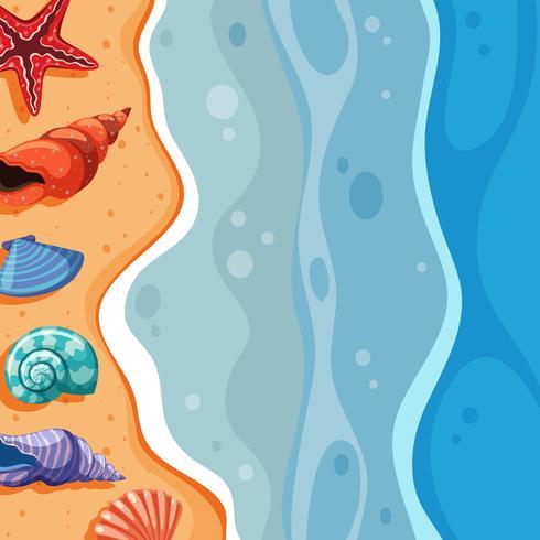 Scène de fond avec des coquillages sur la plage