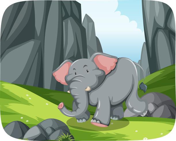 Elefante, correndo, in, natura, scena