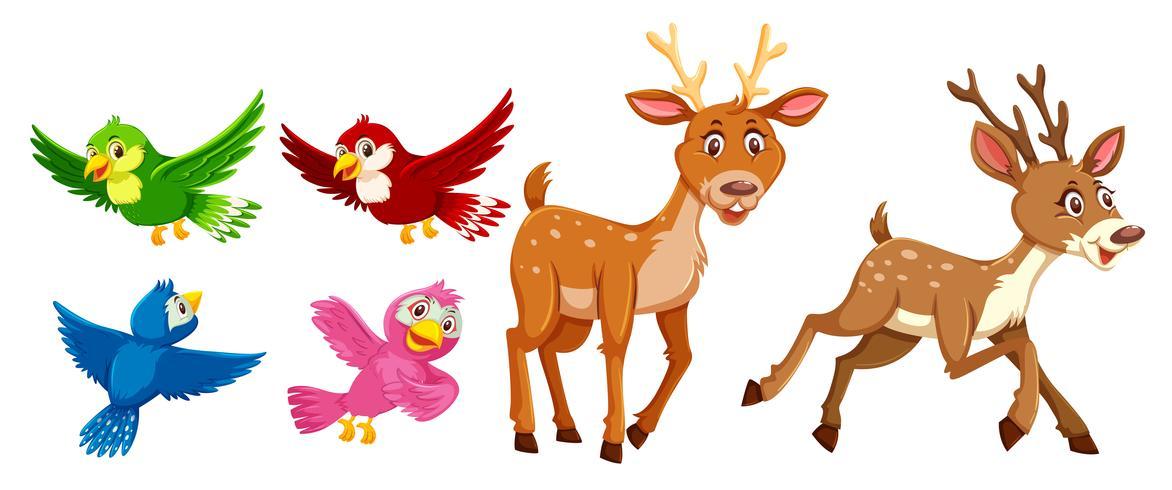 Set of deer and bird character
