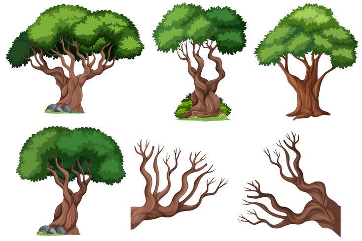 Set of ornamental  tree