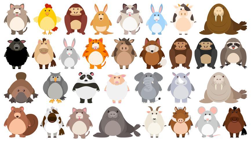 Conjunto de personaje de dibujos animados lindo