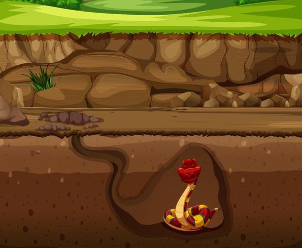 Snake in underground cave