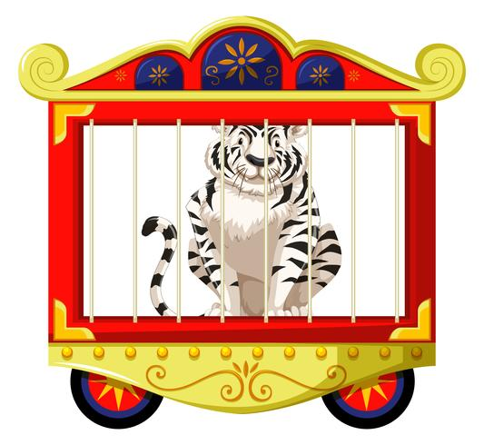 Tigre branco em gaiola de circo