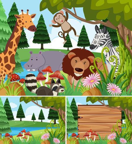 Bakgrundsscenarier med vilda djur och bräda