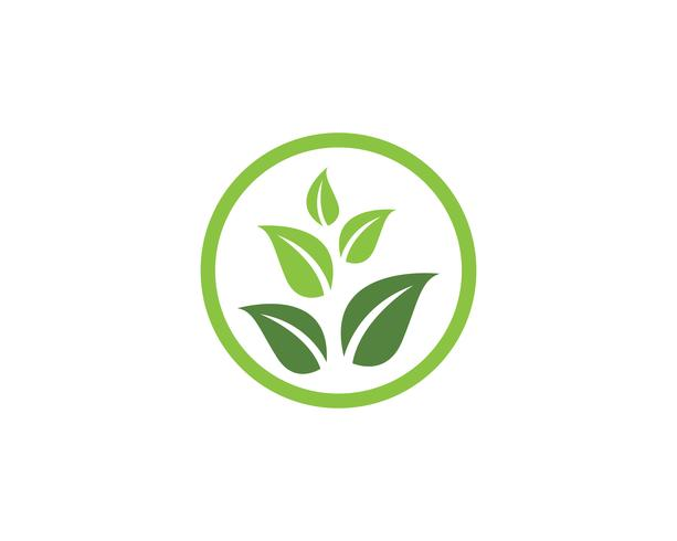 Eco Tree Leaf Logo Vorlage vektor