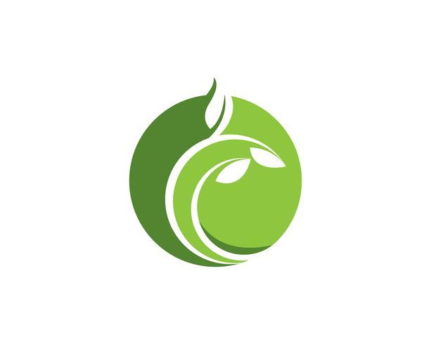 Progettazione dell'illustrazione dell'icona di vettore della foglia dell'albero
