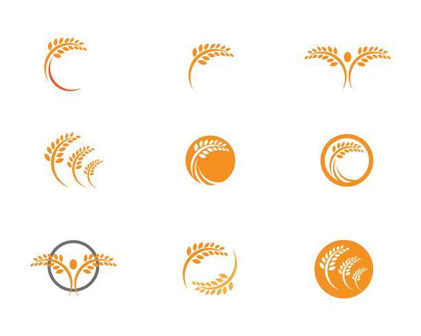 Agricoltura Logo Template di grano, icona di vettore di vita sana logo