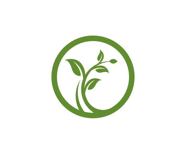 Plantilla de logotipo de hoja de árbol ecológico vector
