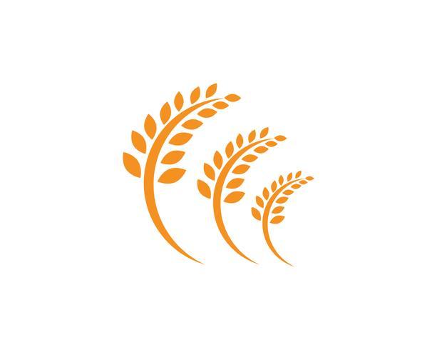 Landbouw tarwe Logo sjabloon, gezond leven logo vector pictogram