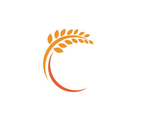 Landwirtschaftsweizen Logo Template, gesunde Lebenlogo-Vektorikone