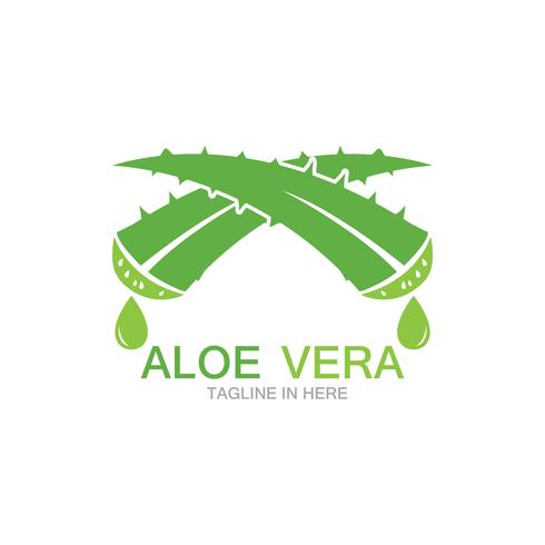 Aloë vera logo vector ilustration sjabloon