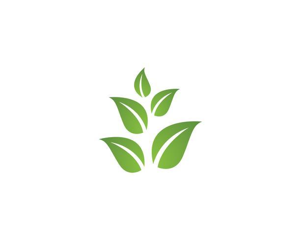 Tree Leaf Vector icon Illustration design