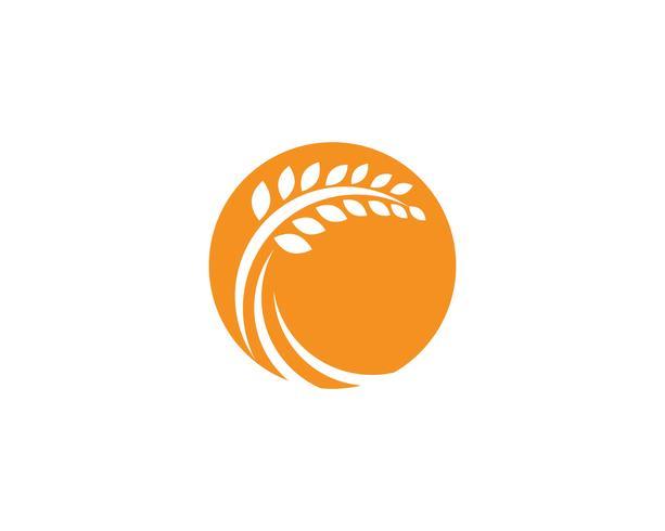 Jordbruk vete Logo Mall, hälsosam livslogo vektorikonen