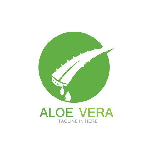 Modello di ilustration di vettore di logo della vera dell'aloe