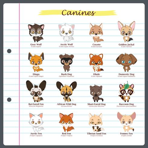 Ilustraciones caninas con nombres regulares y científicos. vector