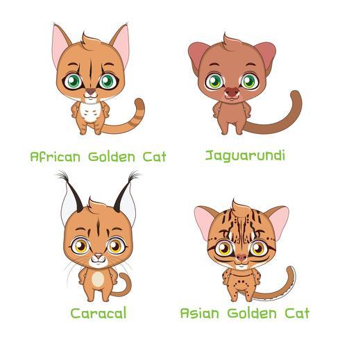 Conjunto de especies de gatos salvajes de tamaño mediano.