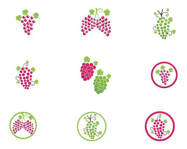 Ontwerp van de het pictogramillustratie van druiven het vector