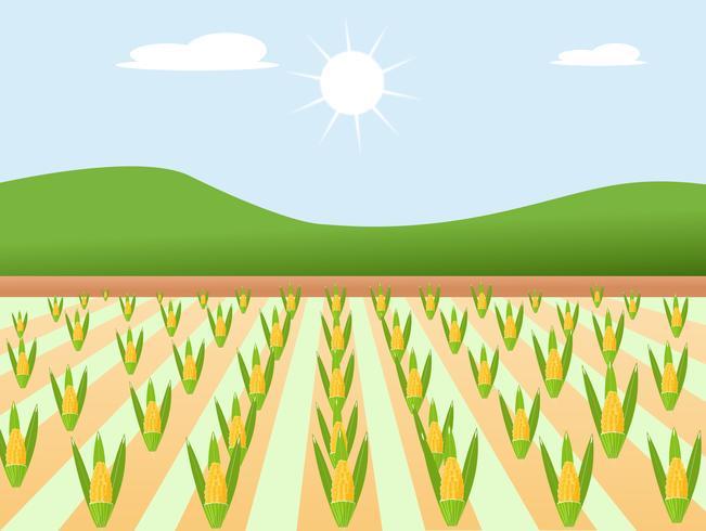 Dourado doce e bonito do projeto de alta qualidade do milho da exploração agrícola com beleza colorida. sinal de ilustração vetorial.