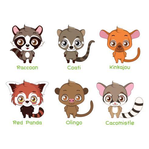Tiere der Familie Procyonidae