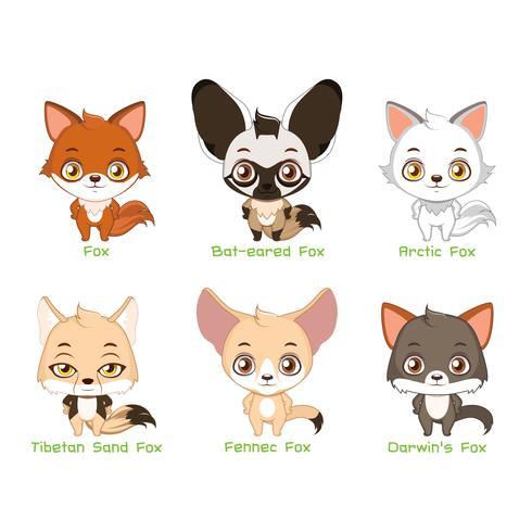Conjunto de especies de zorros. vector