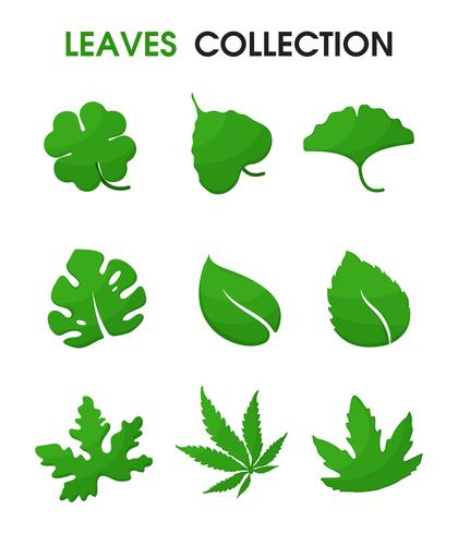 Beautiful shapes of leaves. Vector Illustration.
