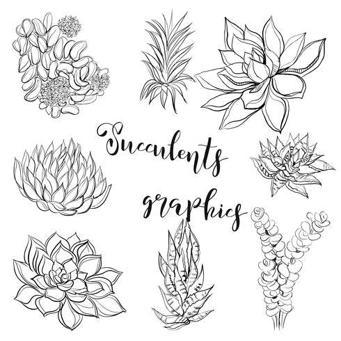 Succulents. Graphics. Coloring book. Black. Vector illustration.