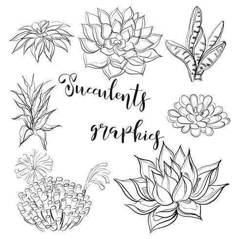 Succulentes Graphique Livre De Coloriage Noir