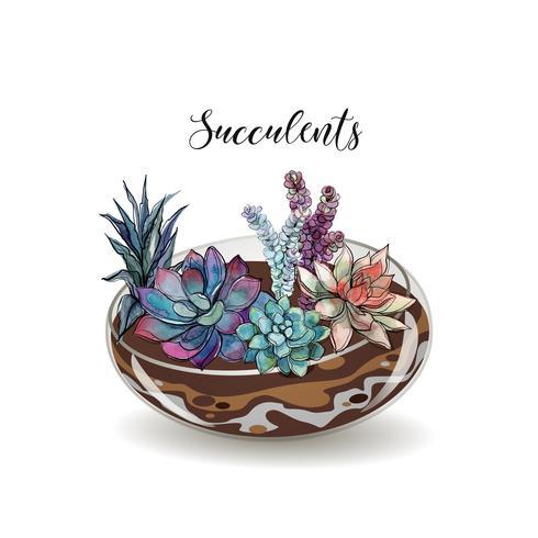 Suculentas en acuarios de vidrio. Composiciones decorativas de flores. Gráficos. Acuarela. Vector.