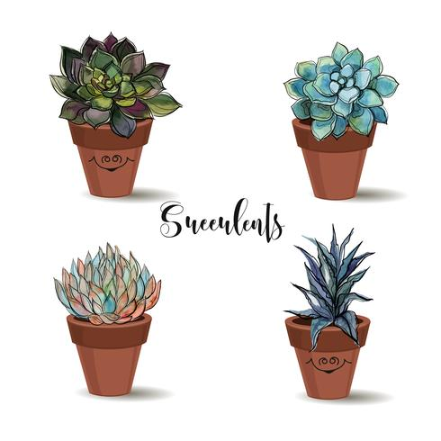 Succulents in clay pots. Set. Graphics with watercolor. Vector. vector