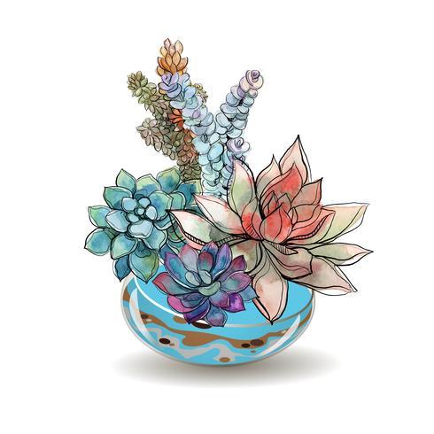 Suculentas en acuarios de vidrio. Arena de color Composiciones decorativas de flores. Gráficos. Acuarela. Vector.
