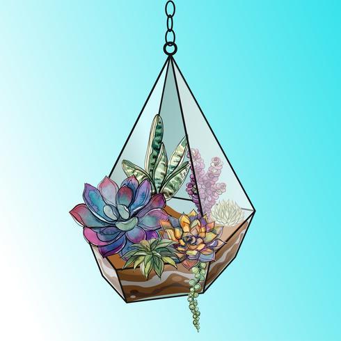 Flower arrangement of succulents in a geometric glass aquarium. Vector