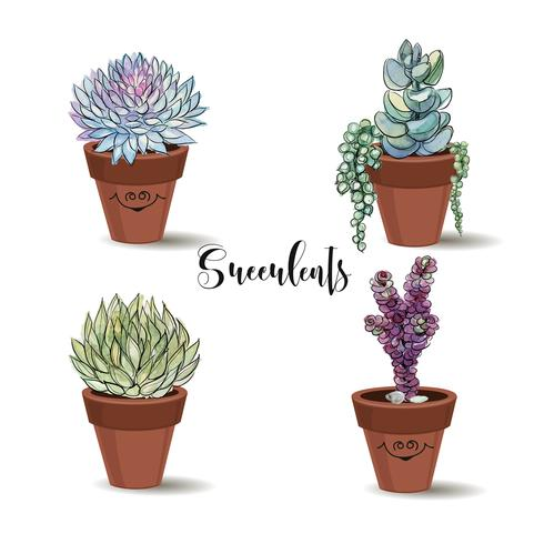 Succulents in clay pots. Set. Graphics with watercolor. Vector.