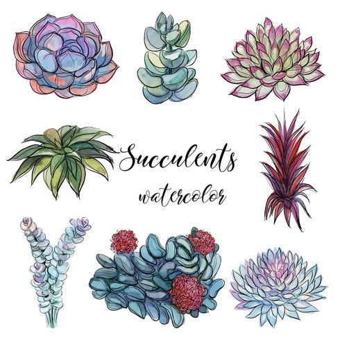 Set di piante grasse. Acquerello. Grafica. Oggetti isolati. Illustrazione vettoriale