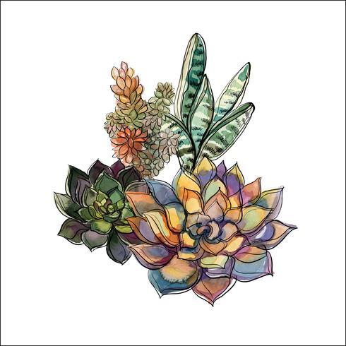Mazzo di piante grasse. Composizione floreale per il design Acquerello. Grafica. Vettore.