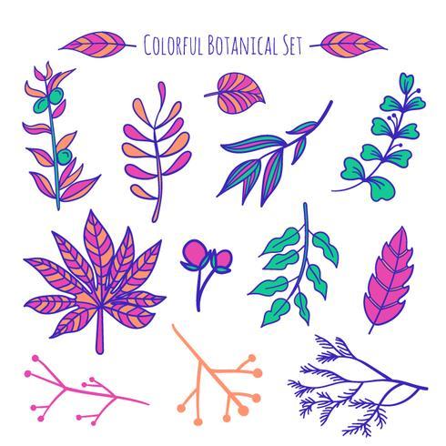 Éléments botaniques dessinés à la main de vecteur