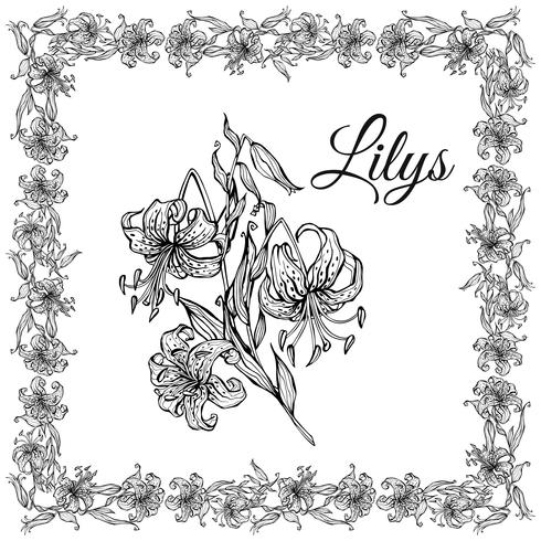Square frame of tiger Lily flowers. Set. Coloring. Vector. vector