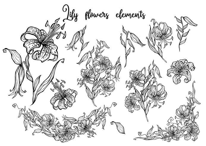 Lirio tigrado. Patrón sin costuras. Frontera de la flor. Ilustracion vectorial vector