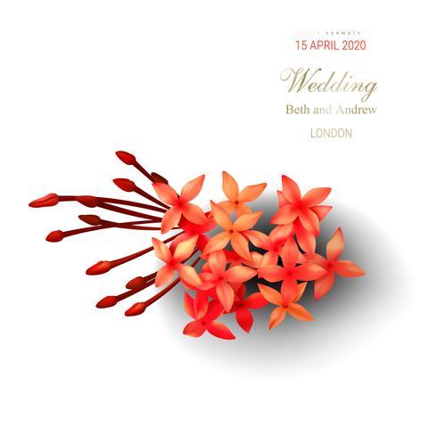 Fleurs d'ixora tropicales rouges sur fond blanc