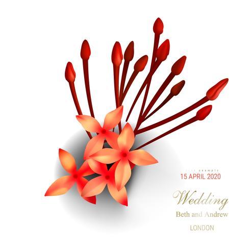 Tropische rode ixora bloemen op witte achtergrond