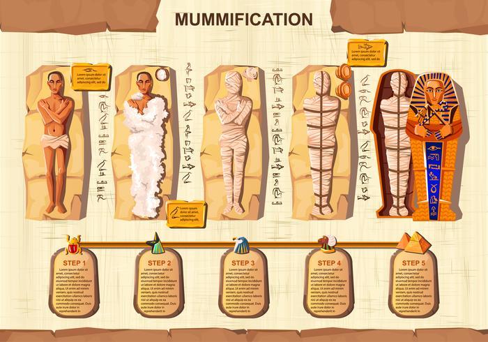 Vettore del fumetto della creazione della mummia infographic