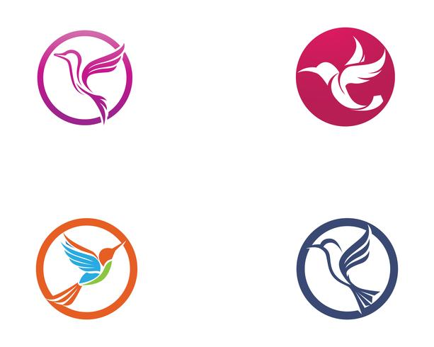 Hummingbird icon logo and symbols template vector