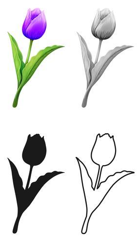 Set van tulp bloem