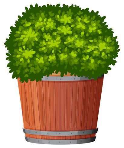 En grön växt i kruka